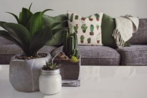 Cute living room with cacti on the table.
