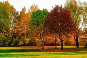 A park full of bright trees, each at a different stage in the fall process (one is red, one yellow, and one green).