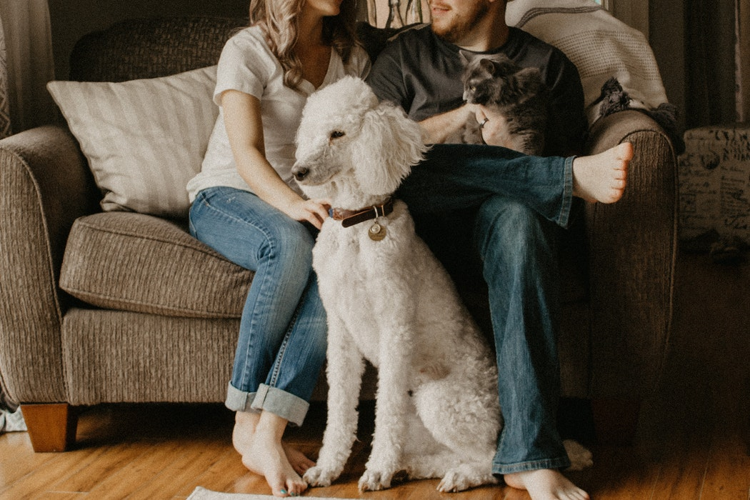 A man and a woman sitting on a couch with a dog and a cat.