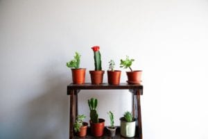 A row of succulents against a white wall.
