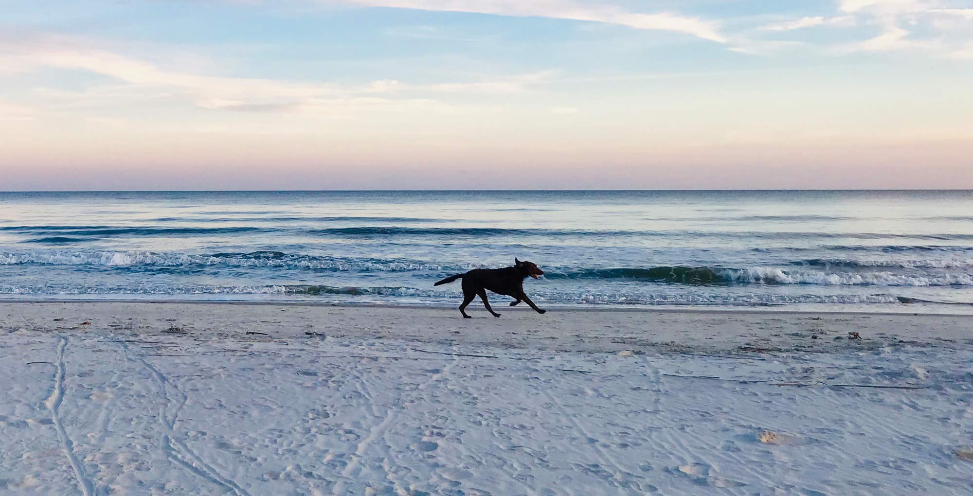 Dog On The Run From Forest Beach to Sea Pines