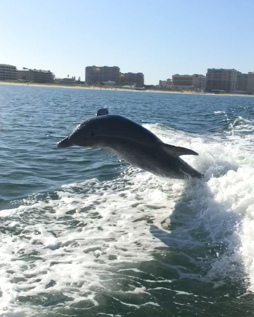 Clearwater Beach dolphin scores a 10!