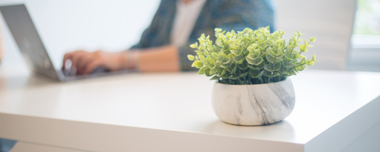 5 Perfect Plants to Decorate Your Home Office