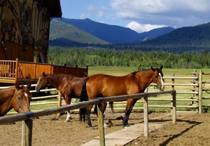 Northern Colorado Horse Properties