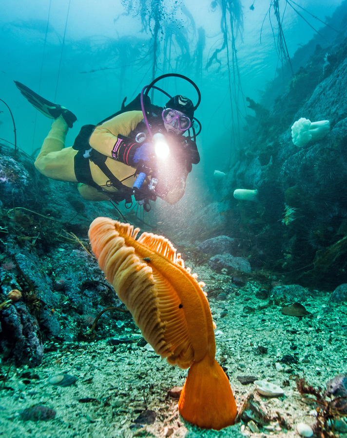Go diving near Nanaimo homes.