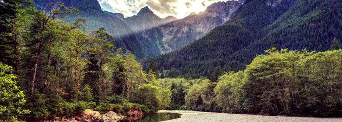 Maple Ridge Nature
