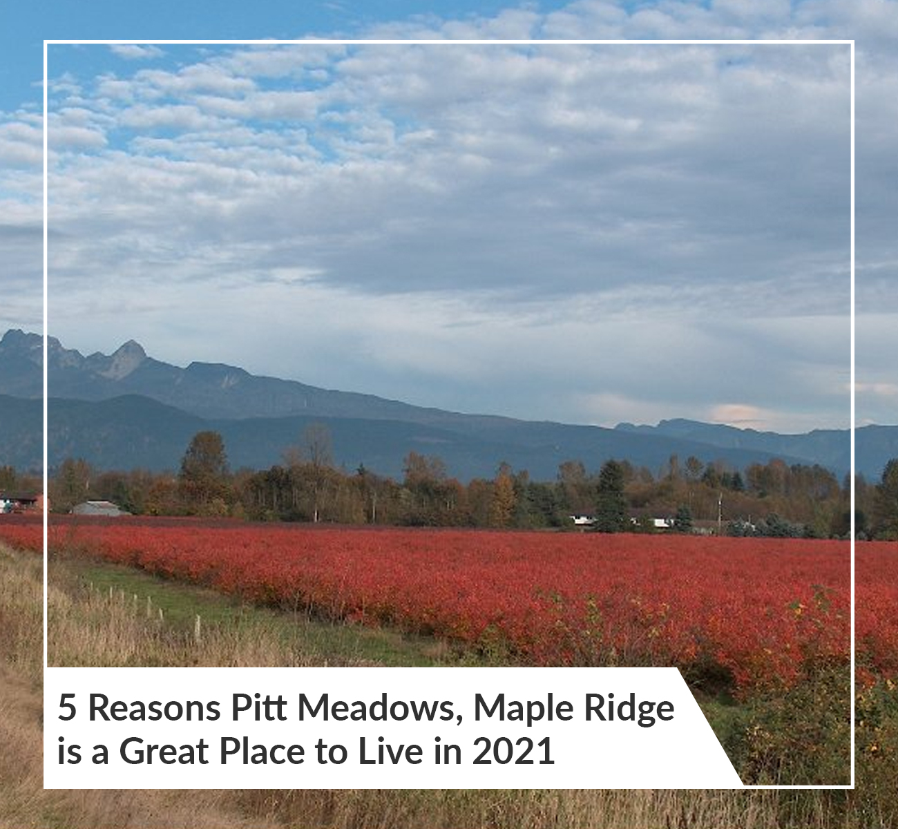 Pitt Meadows, Maple Ridge BC
