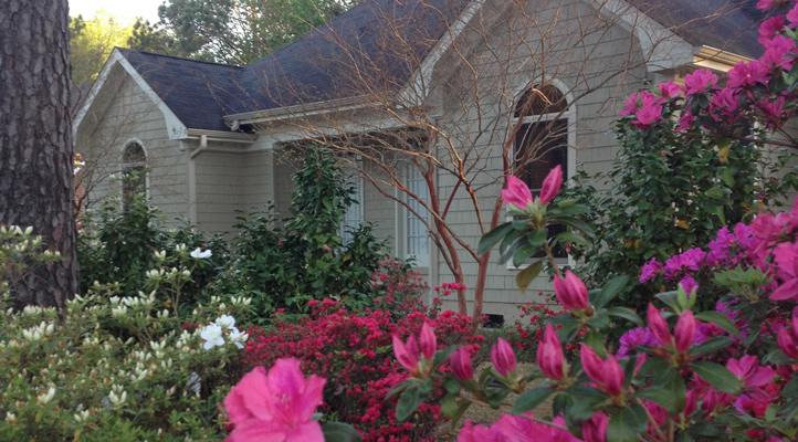 Azaleas in front of my house in Wilmington